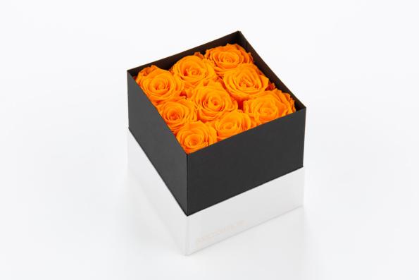 flobox Prestige Orange Rosen